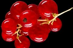rote-johannisbeere